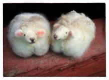 tovade får